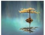 M.G. Parker Memorial Library presents Guided Meditation (Online Program)
