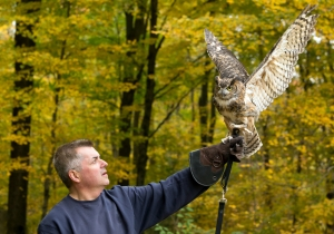 West Springfield Public Library presents- Virtual Wingmasters Event: Birds of Prey & The World of Owls